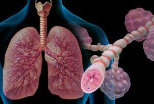lungs zoom in